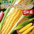 とうもろこし サンライズコーン 5kg 千葉県産 スイートコーン 送料無料 【8月中旬〜出荷】