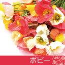 3月のお花【ポピー】切花・色混合50本・送料無料!【RCP】