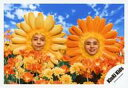 【中古】生写真(ジャニーズ)/アイドル/KinKi Kids KinKi Kids/堂本剛・堂本光一/横型・顔正面・花の被り物・剛口閉じ・光一微笑・手前に花オレンジ黄・背景空/「道は手ずから夢の花」PV&ジャケ写撮影/公式生写真