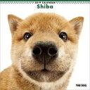 【エントリーでポイント10倍!(7月11日01:59まで!)】【中古】カレンダー THE DOG 柴 2019年度カレンダー