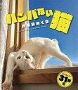 ショッピング卓上カレンダー 【中古】カレンダー ハンパない猫万年日めくり 卓上カレンダー