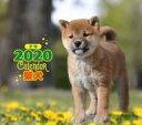 【新品】カレンダー 柴犬 2020年ミニカレンダー