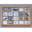 動物化石標本 AF-20N 20種組...