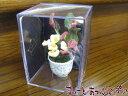 ミニチュア ロイターポーセリン 観葉植物の鉢植え RP1433-5 ドールハウス用