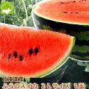 北海道富良野産 スイカ 2Lサイズ6-7.5kg1玉【送料無料】【10P03Dec16】