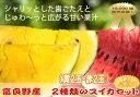 【北海道富良野産】有機肥料でとっても甘く育ったスイカ 2種類セット【赤2玉・黄色2玉】【05P09Jul16】