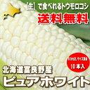 北海道富良野産 ピュアホワイト 10本入(Mから2L込)【送料無料】【05P09Jul16】