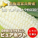 北海道富良野産 ピュアホワイト 2Lサイズ 12本入【送料無料】【05P09Jul16】