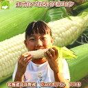白いとうもろこし 北海道 富良野産 ピュアホワイト 10本入 MからLサイズ混み 送料無料