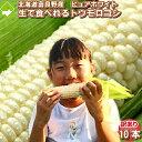 訳あり とうもろこし ピュアホワイト 10本入り 北海道 富良野産 送料無料