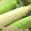 ショッピングとうもろこし とうもろこし 北海道富良野産 ピュアホワイト 2Lサイズ 10本入【送料無料】