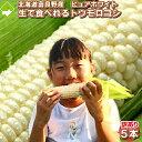北海道富良野産 白い とうもろこし 訳あり ピュアホワイト 5本入 【送料無料】