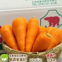 北海道富良野産 低農薬栽培 訳あり(規格外) 人参(にんじん) (SサイズからLサイズ込
