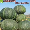 富良野産 坊ちゃんかぼちゃ(ぼっちゃんカボチャ) 1玉  10P13Dec13_m【10P03Dec16】