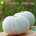 北海道富良野産 白い南瓜 雪化粧5kg【2?4玉入】 【送料無料】【10P03Dec16】