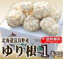 北海道富良野産 最高級 ゆり根 1kg 【送料込】 【05P09Jul16】