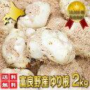 北海道富良野産 最高級 百合根(ユリ根) 2kg 【送料無料】  【RCP】【05P09Jul16】