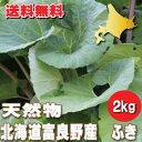 【ご予約販売】北海道ふらの産 天然 無農薬 ふき(フキ) 2kg 【送料無料】【10P03Dec16】