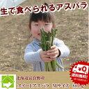 アスパラガス グリーン 北海道富良野産 秀品  Mサイズ 8...