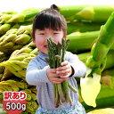 ショッピング予約 【ご予約販売】北海道ふらの産 訳ありグリーンアスパラ【500g】【10P03Dec16】