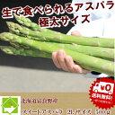ハウス栽培 北海道富良野産 グリーンアスパラ 極太 2Lサイズ 500g 【送料無料】