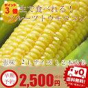 【生】で食べる!フルーツトウモロコシ 北海道富良野産  恵味【2Lサイズ12本入り】