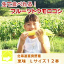 【平成30年発送】とうもろこし 北海道 生で食べれる 富良野...