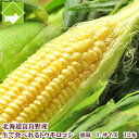 とうもろこし 北海道 生で食べれる 富良野産  恵味 Lサイズ12本入り 送料無料10P03Dec1610P23Apr16