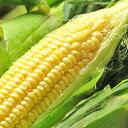 千葉県産 【生】で食べれるトウモロコシ ゴールドラッシュ 約5kg【送料無料】