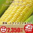 とうもろこし 北海道 生で食べれる 富良野産  恵味 Lサイズ12本入り 送料無料05P18Jun1610P23Apr16