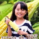 生で食べれるトウモロコシ 北海道 富良野産 恵味 10本入り(Lから2Lサイズ混み)
