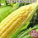 とうもろこし 北海道富良野産 生で食べれる フルーツトウモロコシ 恵味 10本入り(Lから2L混合) 送料無料 一部送料無料 別途送料が加算される地域あり