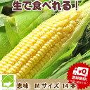 【生】で食べれるトウモロコシ(とうもろこし) 北海道富良野産 訳あり 恵味【 Mサイズ14本入り】【訳あり】送料無料【10P03Dec16】