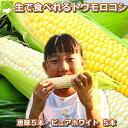 生で食べれるトウモロコシ 北海道富良野産 ピュアホワイト5本...
