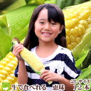楽天スーパーSALE限定 【生】で食べる!北海道富良野産 フルーツトウモロコシ 恵味 2Lサイズ 1