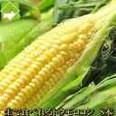 とうもろこし 生で食べれる 北海道 富良野産 恵味 秀品 2L 8本 一部の地域 送料無料 別途送料が発生する地域あり