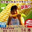 【生】で食べれるトウモロコシ 北海道 富良野産 訳あり 恵味 Mサイズ14本入り 送料無料