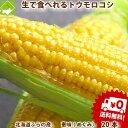 【生】で食べれる!北海道富良野産 フルーツとうもころこし 恵味(めぐみ) 2Lサイズ 20本 送料無料 別途送料が発生する地域があります