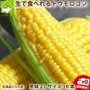 とうもろこし 北海道富良野産 恵味(めぐみ) 2Lサイズ 1...