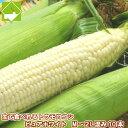 生で食べれるとうもろこし 北海道富良野産 ピュアホワイト 10本入 Mから2L込 一部の地域 送料無料