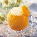 フレンズファクトリー)オレンジシャーベットラウンド1個(冷凍食品 アイスクリーム 洋菓子 まるごと フルーツ 果物 くり抜き デザート おやつ 焼肉屋 アイス シャーベット おれんじ)