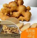 食用 高知県産近江生姜(白)4kg[生姜 酢漬け 温活 免活]