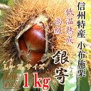 信州産 小布施栗(銀寄)【低温熟成・無薫蒸】1kg(L~2Lサイズ)