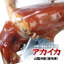 【姿冷凍】送料無料アカイカ(ソデイカ)山陰産[冷凍] 1杯(12kg前後)【お刺身・イカ天に♪】