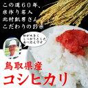 【23年度新米】【鳥取県産】極太米「コシヒカリ」(10kg)[送料無料][常温]