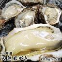 【予約販売】送料無料!【山陰産】岩牡蠣(カキ)[生]5個セット約1kg(200g前後が5個