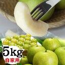 二十世紀梨【自家用】【訳あり】 5kgセット【送料無料】【鳥...