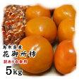 【訳あり花御所柿】5kg(18-30玉)セット〔へたすき〕〔送料無料〕〔鳥取県特産品〕[常温]【収穫があり次第出荷】