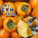 富有柿(ふゆうかき)【進物用】5kgセット(18-24玉入り)〔送料無料〕収穫があり次第出荷