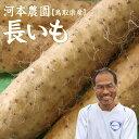 【予約】【河本農園】長いも(2-3本入)約3kg送料無料鳥取県[常温]お歳暮